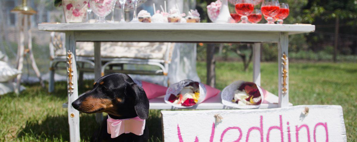 Dekoracje ślubne - Dekoracje weselne - Dekoracje na ślub - Organizacja wesel - Dekoracje ślubne Toruń - Dekoracje samochodu weselnego